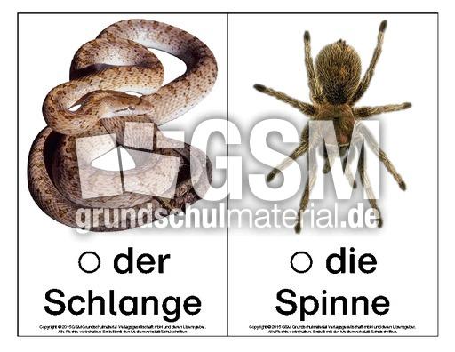 Bild-Wort-Karten-Tiere-B - Bild-Wort-Karten-DaZ - Deutsch ...