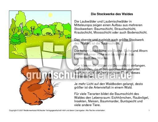 fehlerlesenstockwerkedeswaldeslesetext14 die