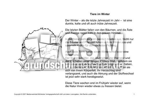 fehlerlesentiereimwinterlesetext1 tiere im winter
