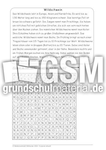 wildschwein 39 tierbeschreibungen tierbeschreibungen lesen deutsch klasse 3. Black Bedroom Furniture Sets. Home Design Ideas