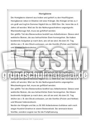 arbeitsblatt vorschule 187 tierbeschreibung 252ben bezug