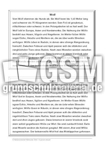 Wolf - Wolf - 39 Tierbeschreibungen - Leseu00fcbungen ...