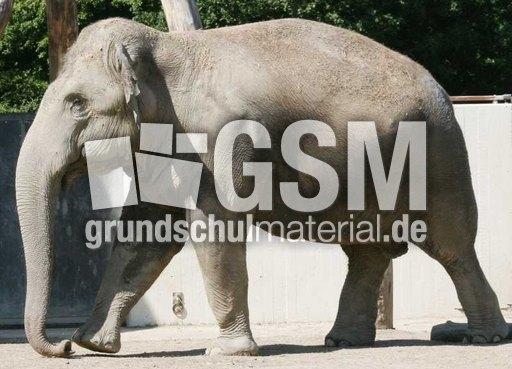 Indischer-Elefant-1 - Asiatischer Elefant - 06 Ru00fcsseltiere ...