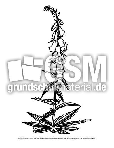Ausmalbild Fingerhut Ausmalbilder Blumen Fruhling