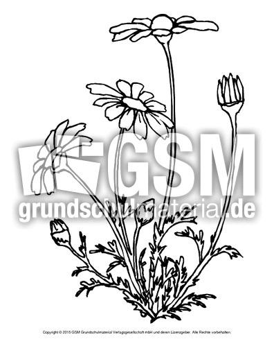 Ausmalbild Gänseblümchen Ausmalbilder Blumen Frühling