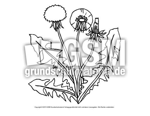 Ausmalbild Löwenzahn 1 Ausmalbilder Blumen Frühling