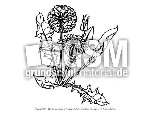Ausmalbild Löwenzahn 3 Ausmalbilder Blumen Frühling