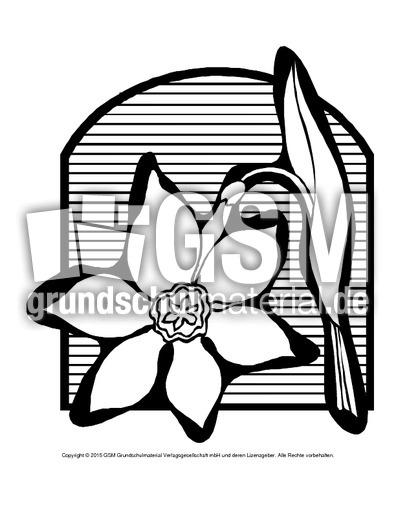 Ausmalbild-Narzisse-2 - Ausmalbilder Blumen - Frühling ...