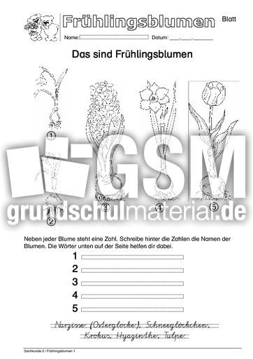 Arbeitsblatt VAS 1 - Arbeitsblätter - Frühblüher - Frühling ...