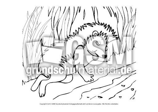 igel ausmalbild pdf  zeichnen und färben