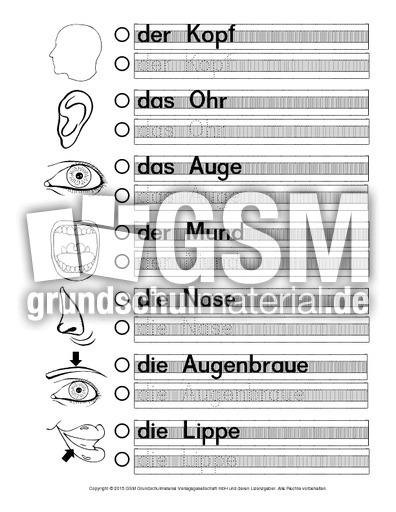 AB-Körperteile-B - Arbeitsblätter - Menschlicher-Körper - HuS Klasse ...