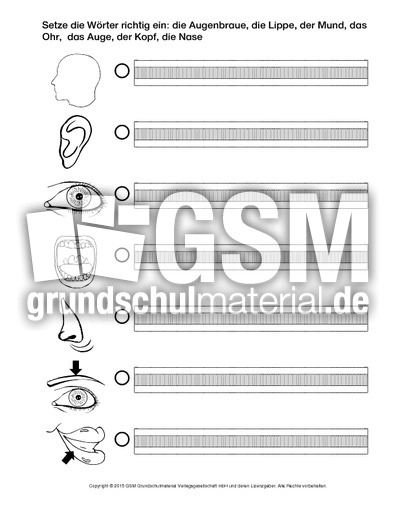 AB-Körperteile-C - Arbeitsblätter - Menschlicher-Körper - HuS Klasse ...