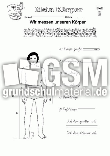 Arbeitsblatt 02 - Arbeitsblätter - Menschlicher-Körper - HuS Klasse ...