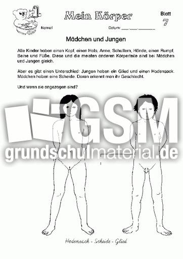 Arbeitsblatt 07 - Arbeitsblätter - Menschlicher-Körper - HuS Klasse ...