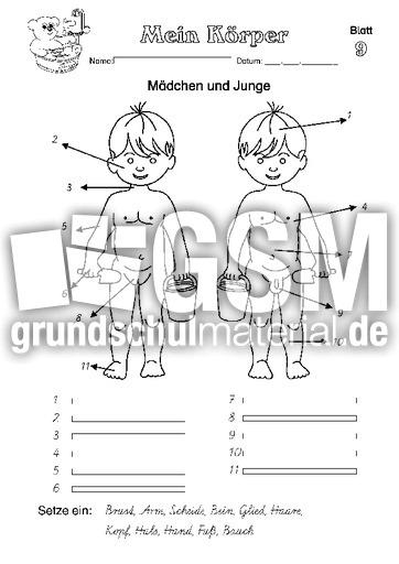 Arbeitsblatt 09 - Arbeitsblätter - Menschlicher-Körper - HuS Klasse ...