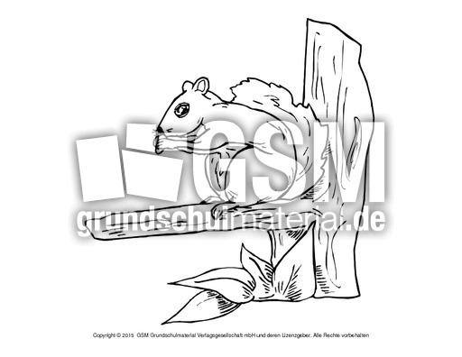 ausmalbildeichhörnchenb 6  ausmalbildereichhörnchen