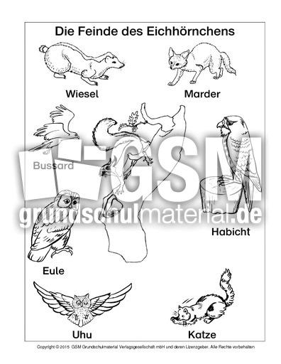 Eichhörnchen Nahrung Arbeitsblatt : Nahrung der eichhörnchen eichh rnchen und sein verhalten