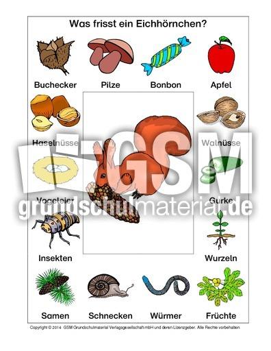 Eichhörnchen Nahrung Arbeitsblatt : Ab eichhörnchen nahrung dateien