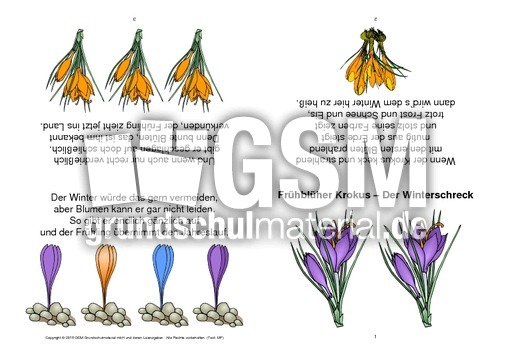Fein Frühlingsblumen Farbseiten Galerie - Beispiel Business ...