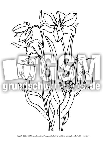 Ausmalbild Tulpe 1 Tulpen Basteleien Frühlings Tulpen Werkstatt