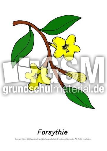 frühlingsblühertafelkartenforsythie  frühlingsblüher