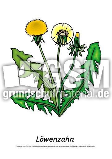 ausmalbild pusteblume lowenzahn  cartoonbild