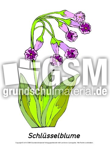 frühlingsblühertafelkartenschlüsselblume