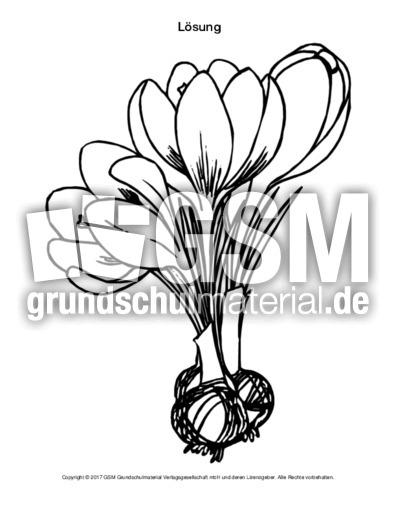 krokuspuzzle  frühlingsblüherfrühblüher  frühling