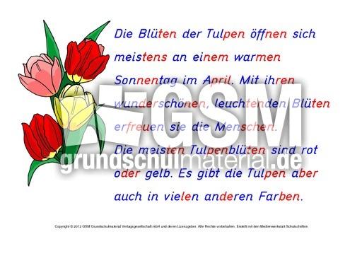 Tulpe-Abschreibtexte 3 - Zusatzmaterial Deutsch ...