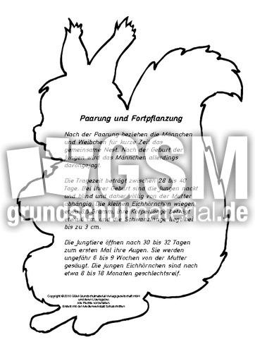 Herbstbuch Eichhörnchen Seite 1 21 Herbstbücher Lapbook Herbst