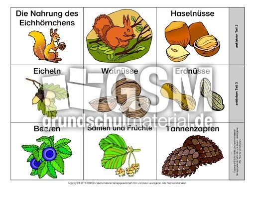 Eichhörnchen Nahrung Arbeitsblatt : Leporello eichhörnchen ernährung b lapbook
