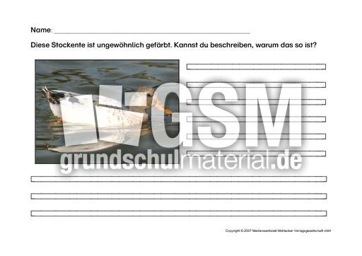 Arbeitsblatt-Stockente-1 - Arbeitsblätter - Die Stockente - Themen ...