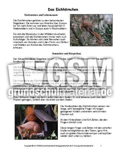 Steckbrief Eichhörnchen Arbeitsblatt : Eichhörnchen steckbrief