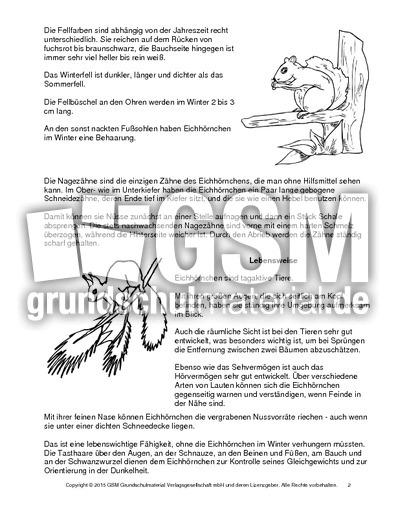 Steckbrief Eichhörnchen Arbeitsblatt : Eichhörnchen steckbrief sw