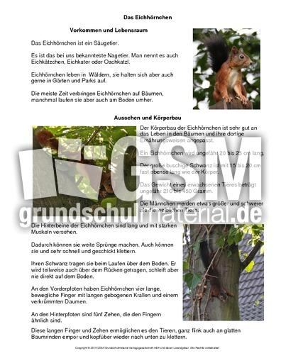 arbeitsblatt vorschule 187 sachtexte 252ber tiere foto