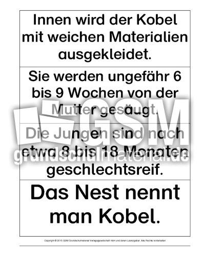 Mindmap-Begriffe-Eichhu00f6rnchen - Mindmap-Eichhu00f6rnchen ...