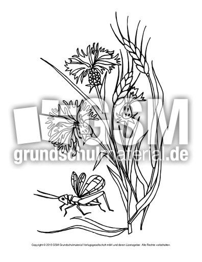 ausmalbildkornblume  ausmalbilder blumen  frühling