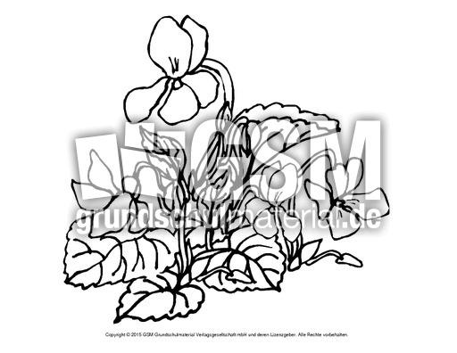 Ausmalbild Veilchen 2 Ausmalbilder Blumen Fruhling