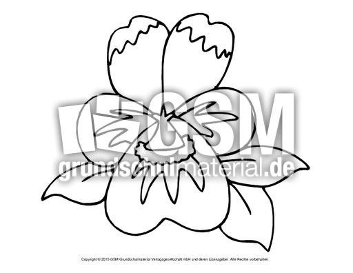 Ausmalbild Veilchen 3 Ausmalbilder Blumen Fruhling