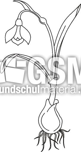 schneegl u00f6ckchen - zeichnungen - fr u00fchbl u00fcher