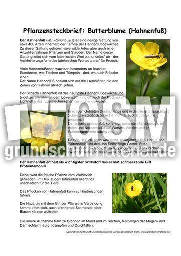 Berühmt Pflanzensteckbrief-Butterblume - Pflanzensteckbriefe - Lesen #IF_55