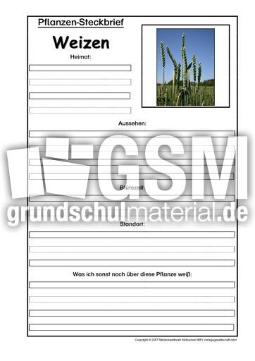 pflanzensteckbriefweizen pflanzensteckbriefe