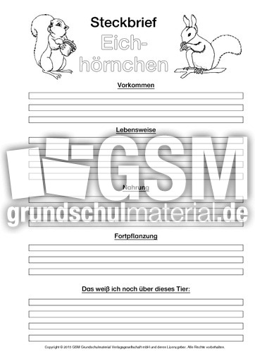 Steckbrief Eichhörnchen Arbeitsblatt : Eichhörnchen steckbriefvorlage sw tiersteckbrief