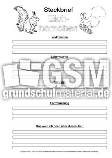 Arbeitsblatt Eichhörnchen Klasse 2 : Eichhörnchen steckbriefvorlage sw tiersteckbrief