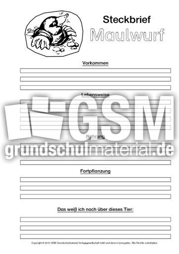 Atemberaubend Haut Maulwurf Anatomie Galerie - Anatomie Von ...