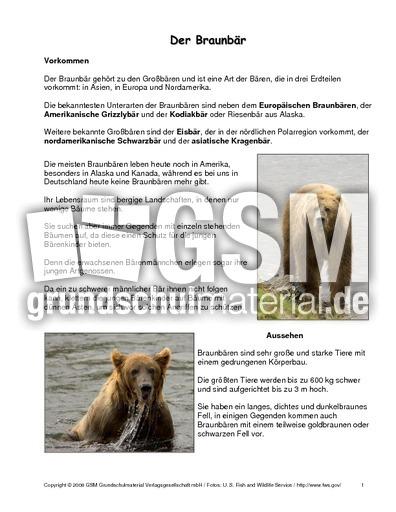 braunb228rsteckbrief tiersteckbriefe lesen