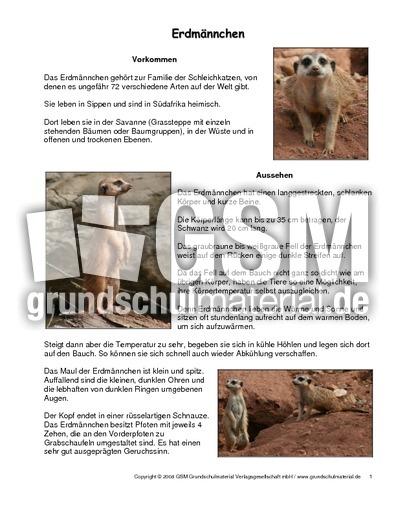 Erdmu00e4nnchen-Steckbrief - Tiersteckbriefe - Lesen ...