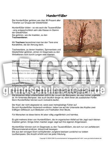 Hundertfüßer-Steckbrief - Tiersteckbriefe - Lesen - Steckbriefe ...
