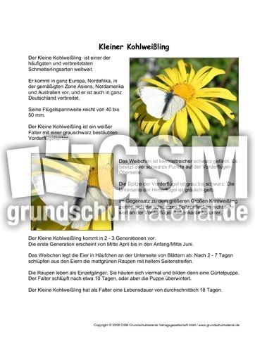 arbeitsblatt vorschule 187 sachtexte grundschule gem228lde