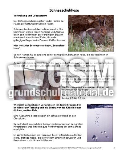 Schneeschuhhase steckbrief tiersteckbriefe lesen steckbriefe tiere sachthemen hus - Steckbrief feldhase grundschule ...